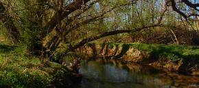 Mystischer Westerwald