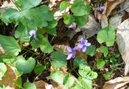 Ostern / Frühling